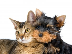 funny-dogs-and-cats-free-wallpaper-download